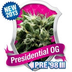 Presidential O.G. Feminized (Royal Queen Seeds)