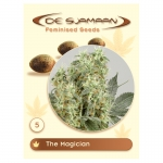 The Magician Feminised (De Sjamaan Cannabis Seeds) 5 seeds
